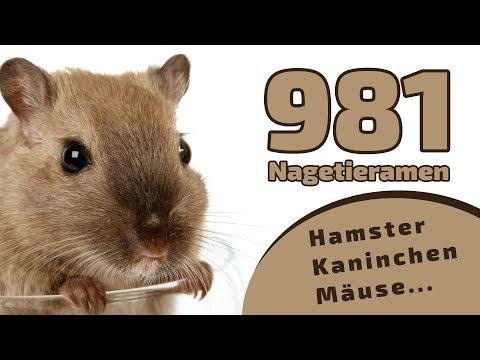 981 schöne Nagetiernamen | Hamster - Kaninchen - Mäuse... ❤ ❤ ❤