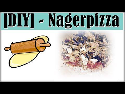 DIY - Nagerpizza Rezept    Leckerlis zum selber backen    Lecker, gesund & günstig
