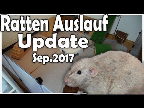 Der neue Rattenauslauf! | Ratten Auslauf Update (Sep. 2017)