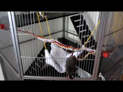 Hängematte für Rattenkäfig