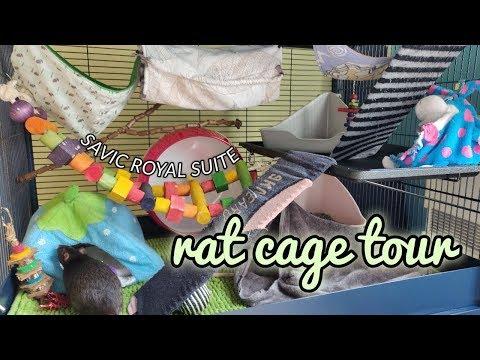 Rat Cage Tour // Savic Royal Suite 95 Double | DIY Pets & Life