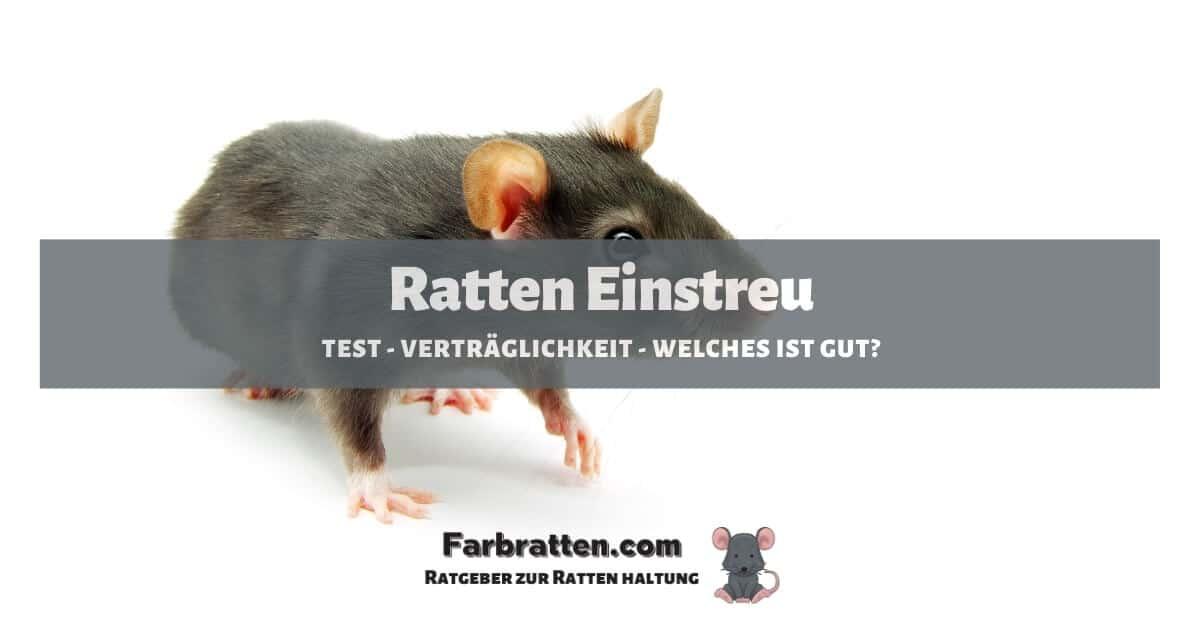 Ratten Einstreu - FB 2