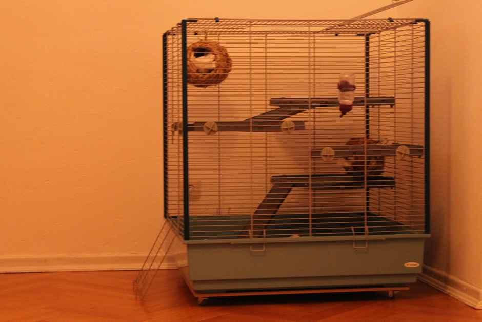 Ratten Voliere - Rattenkäfig