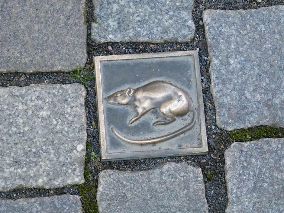 Rattenfänger von Hammeln
