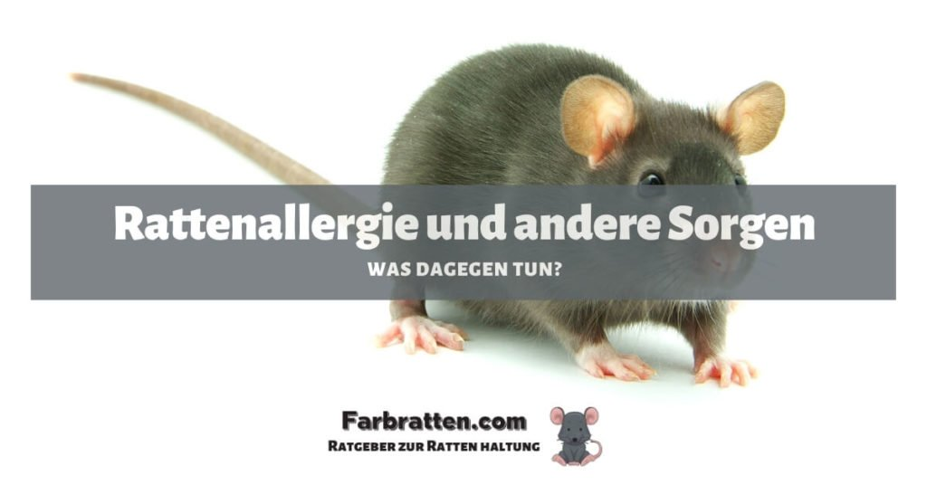 Rattenallergie - FB 2