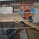 AniOne Nagerkäfig Romulus Naturholz Etagen