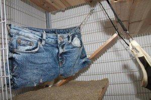 Jeans Hotpants für Rattenkäfig