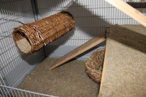 Weidentunnel für Ratten