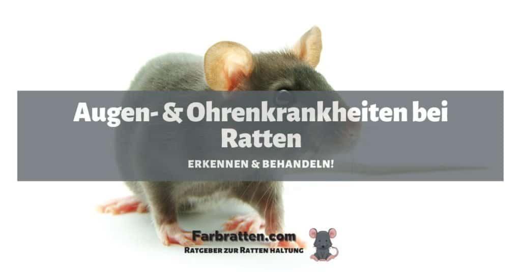 Ratten Augen- und Ohrenkrankheiten - FB 2