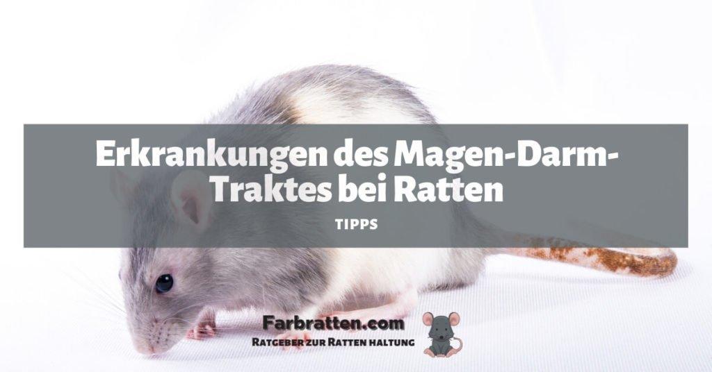 Ratten Magen Darm Erkrankung - FB 2