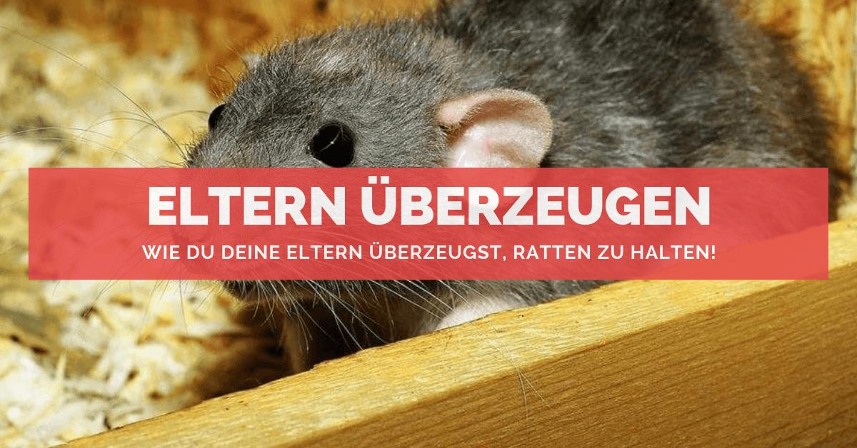 Super Wie Du deine Eltern überzeugst 🐭 Ratten als Haustiere zu halten! @RB_78