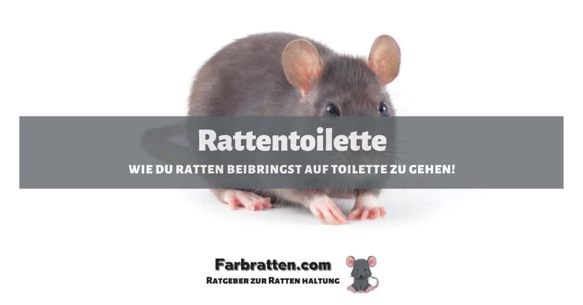 Rattentoilette - FB 2