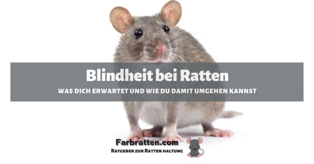 Blindheit bei Ratten - FB 2