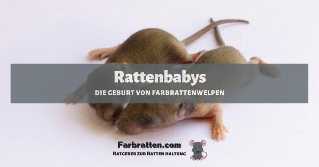 rattenbabys geburt - FB 2