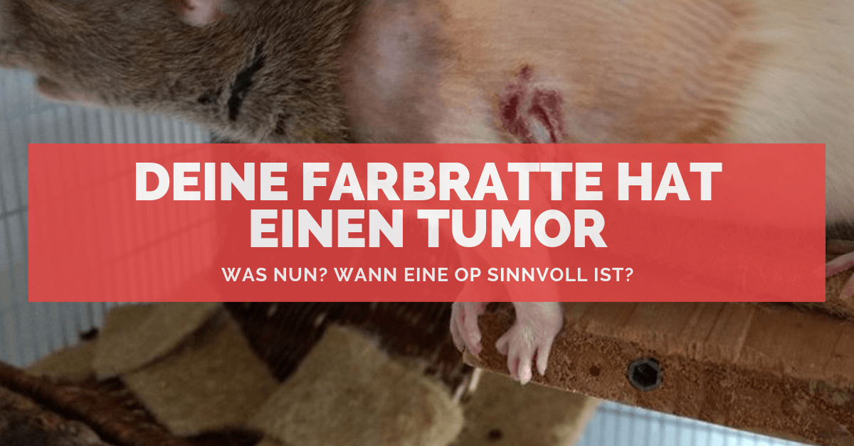 kaninchen tumor lebenserwartung
