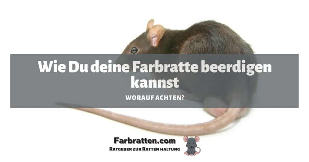 Farbratte beerdigen - FB 2