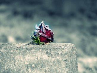 Gefrorene Rose auf Grabstein