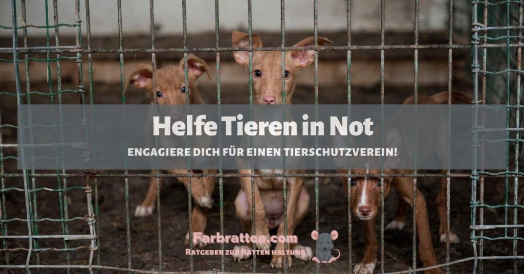 Helfe Tieren in Not - FB 2