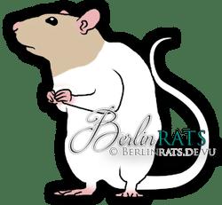 Bareback - Ratte