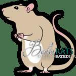 Berkshire - Ratte