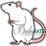 Black Eyed White - Ratte