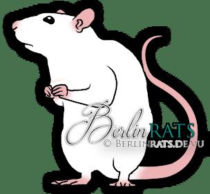 Black Eyed White - Ratte