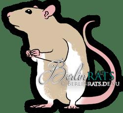 Downunder - Ratte