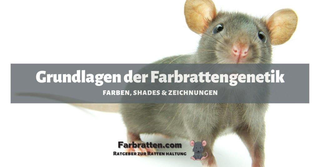 Farbrattengenetik - FB 2