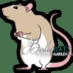 Headspot - Ratte
