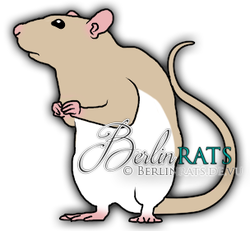 Hooded - Ratte