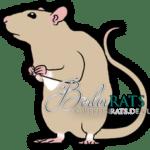 Irish - Ratte