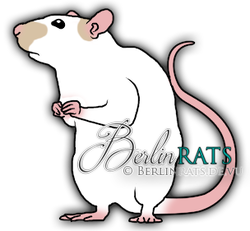 Patched - Ratte