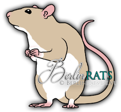 Variberk - Ratte