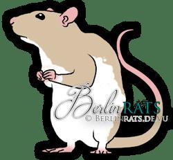 Variegated - Ratte