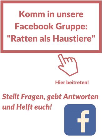 Farbratten Facebook Gruppe