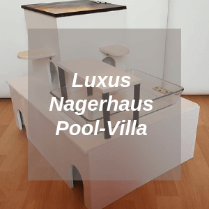 Luxus Nagerhaus Pool Villa