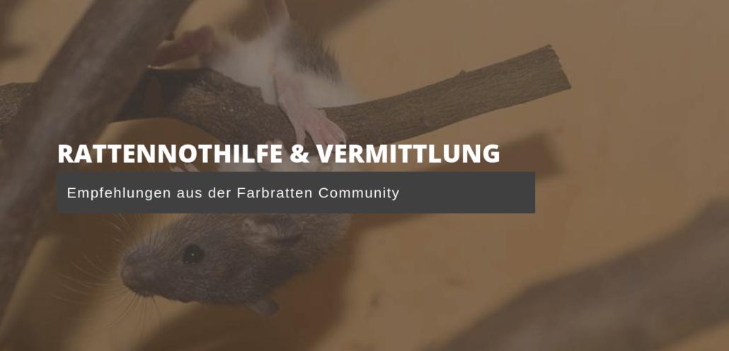 Rattennothilfe & Vermittlung