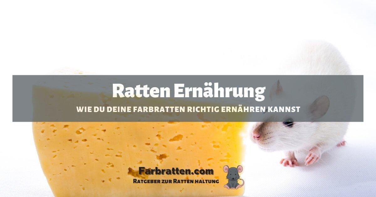 Ratten Ernährung - FB 2