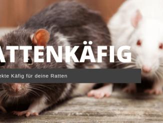 perfekter Rattenkäfig