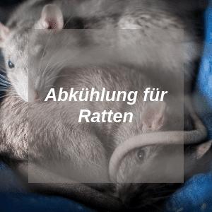 Abkühlung für Ratten