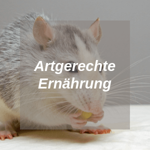 Artgerechte Ernährung bei Ratten