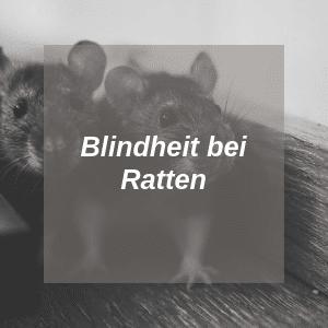 Blindheit bei Ratten