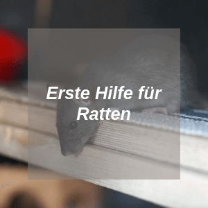 Erste Hilfe für Ratten