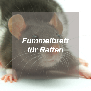 Fummelbrett für Ratten