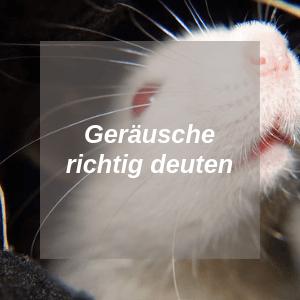 Ratten Geräusche