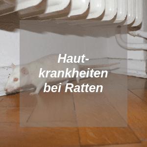 Hautkrankheiten bei Ratten