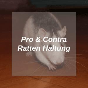 Pro und Contra Ratten Haltung