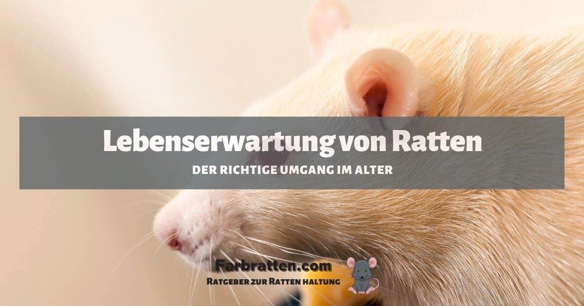 Ratten Lebenserwartung - FB 2