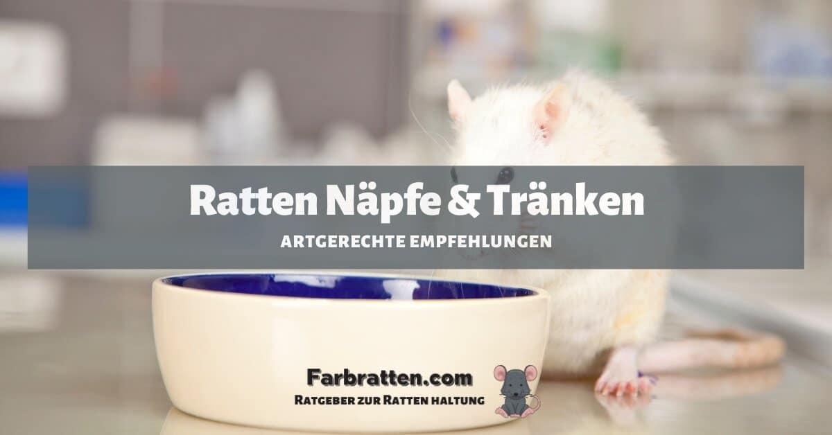 Ratten Näpfe - FB 2