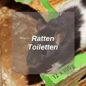 Ratten Toiletten